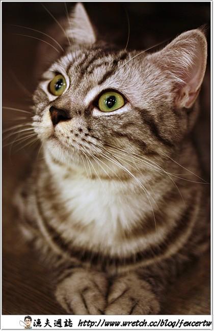 〔台北〕貓咪先生的朋友 ─ 美味餐點與可愛貓咪坐檯,為您消除整天工作的辛勞~