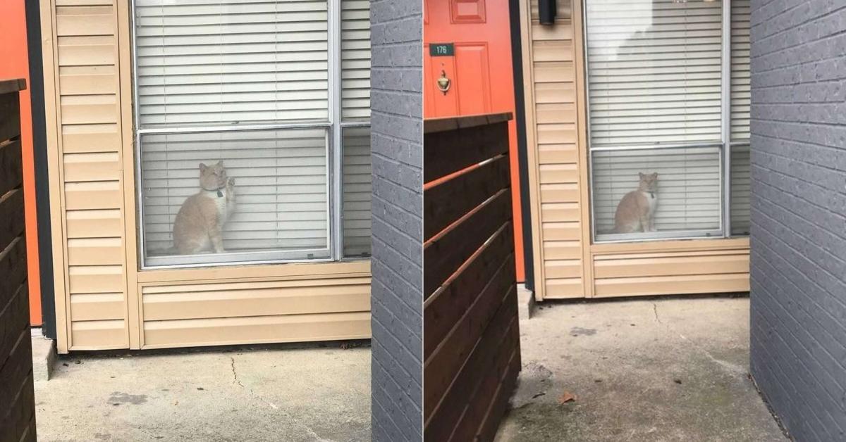 主人在窗外看到自家貓咪——但是卻是在「鄰居家」的公寓窗戶裡面?!