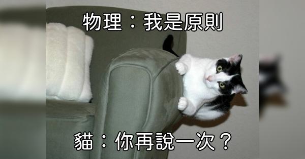 歡樂一下!10張跟貓咪有關的爆笑貼文,滿足你一天的正能量!