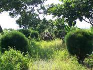 【巡田水遊記】古結休閒公園與哈密瓜的故鄉