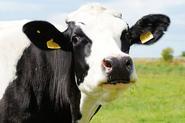 【財經專欄:農業診斷】動物保護需要願景和基礎建設
