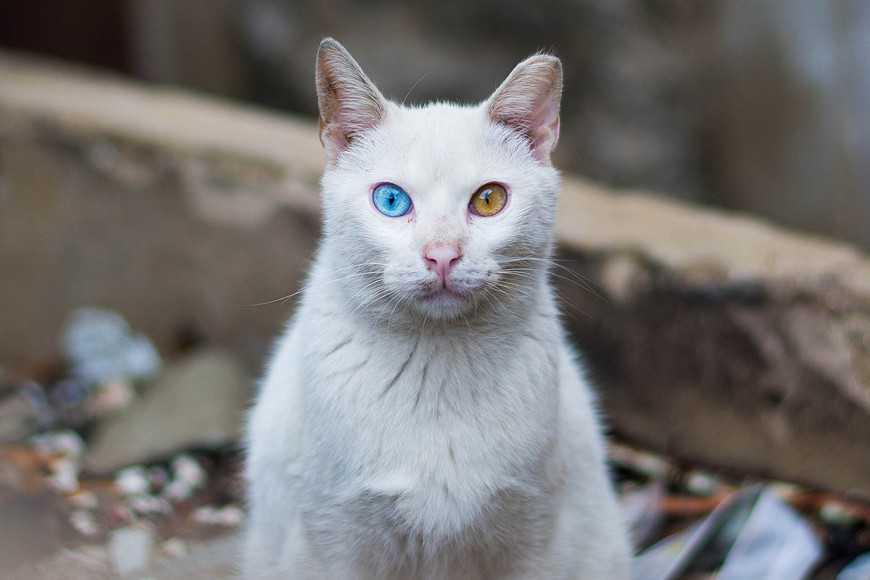 難道是陰陽眼?貓咪看見了什麼?|寵物迷