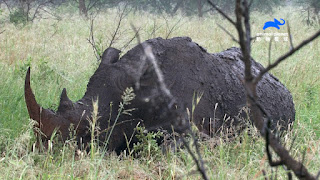 楊祐寧化身野生動物攝影師 邀你欣賞最野大自然