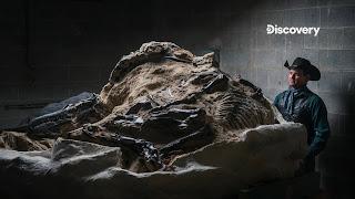 美國西部牛仔也斜槓 尋找恐龍化石當副業可賺上百萬美金?