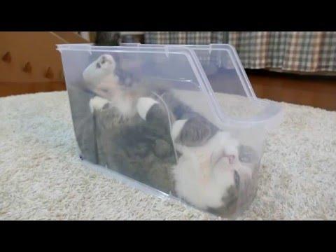 一開始以為是好玩虐貓,喵星人躺在塑膠盒裡時已經在憋笑,竟然拍到牠的臉部特寫後,一切都還不及了...