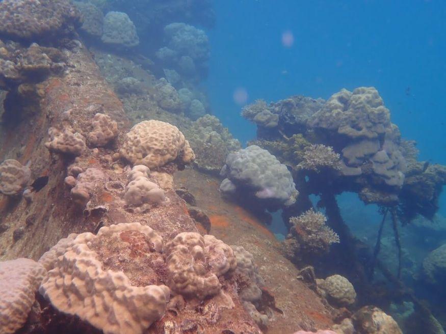 【帛琉必去景點、美食攻略】鯊魚、水母通通在身邊,帛琉到底哪裡好玩?