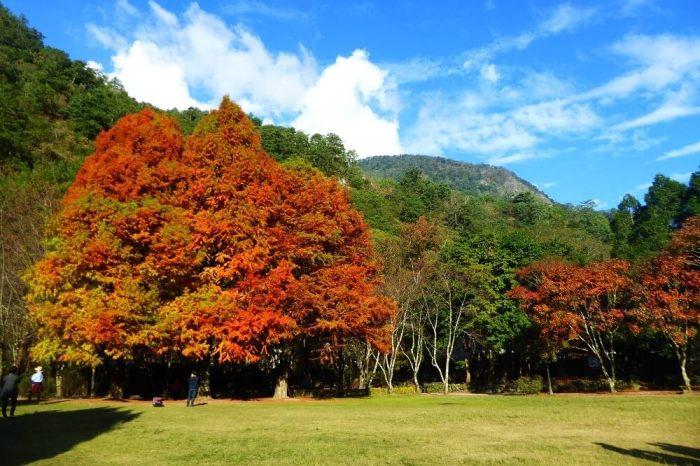 【奧萬大懶人包】賞楓必去!奧萬大國家森林遊樂區交通、附近景點一次看