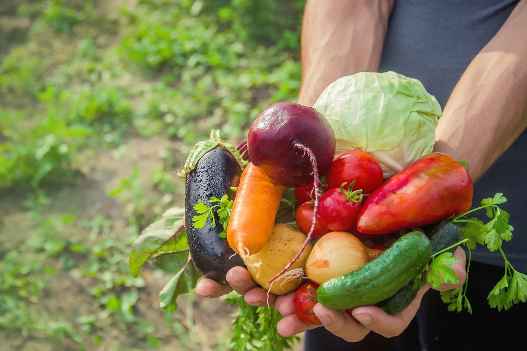 菜籃裡的科學,專家教你辨別有機和綠色農業是什麼!