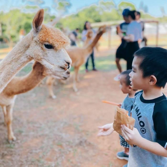 【全台特色休閒農場】親子旅遊好去處!台灣11個農場、牧場推薦