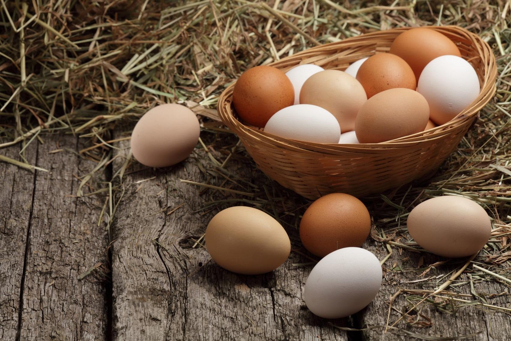 【食物大百科】紅雞蛋vs白雞蛋哪個比較營養?一天到底可以吃幾顆蛋?只吃蛋白真的比較好嗎?