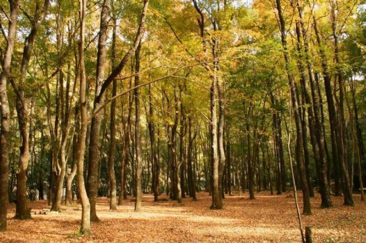 盤點全台7座【森林遊樂區】,讓你一秒變森林系少女!可以踏水、散步還可以吸收負離子,快筆記起來...