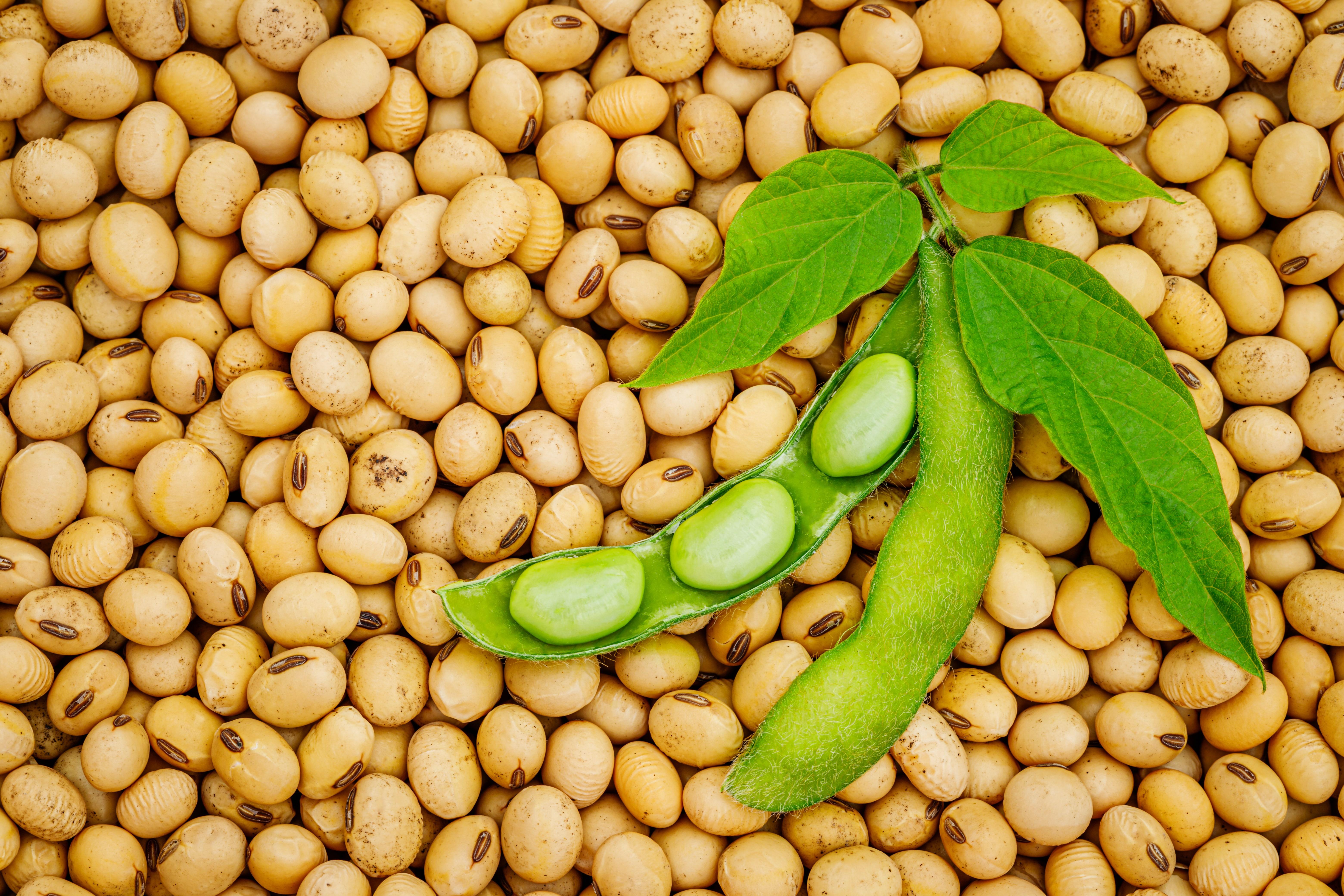 夏日瘋減醣,營養師教你用黃豆、豆製品做減醣料理!健康美味、體重控制兩者兼顧!