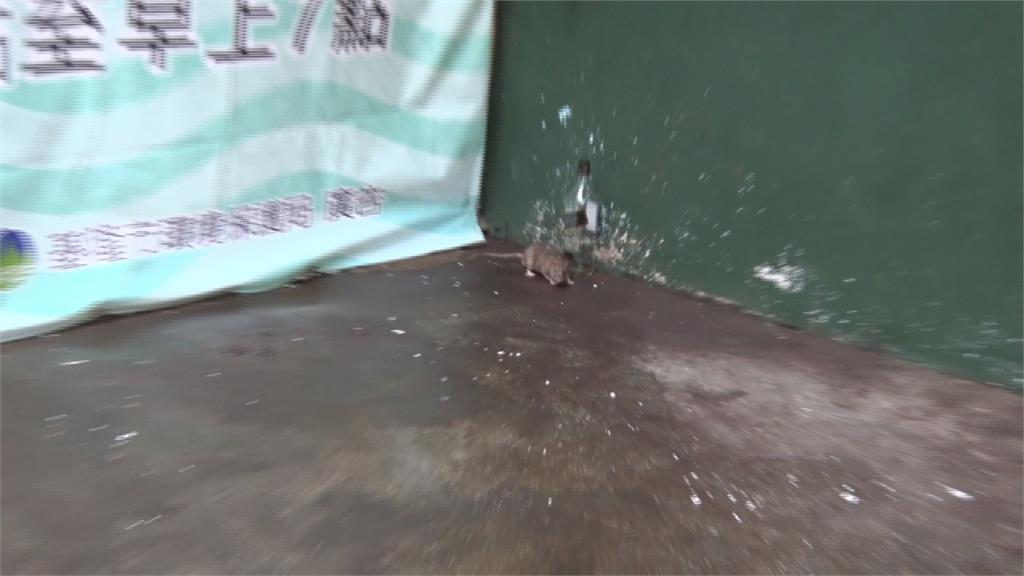 回收區遭民眾亂丟垃圾 崁仔頂漁市老鼠到處跑