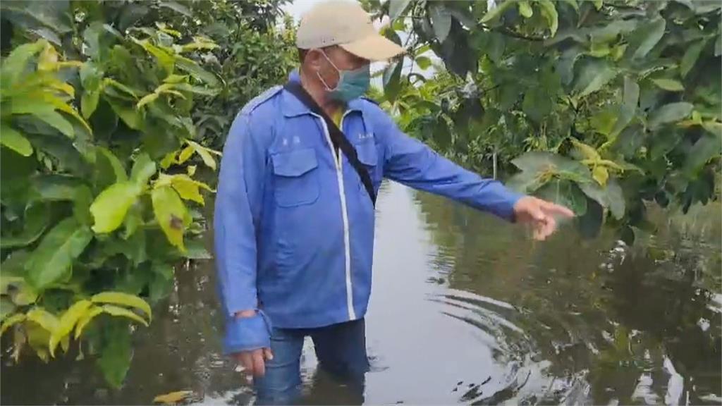 林邊積水不退 農民嘆:蓮霧園退水要等半個月