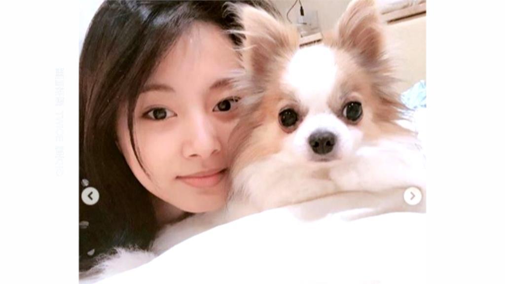 素顏比化妝還美!周子瑜PO與愛犬「床照」 網暴動:好想當那隻狗