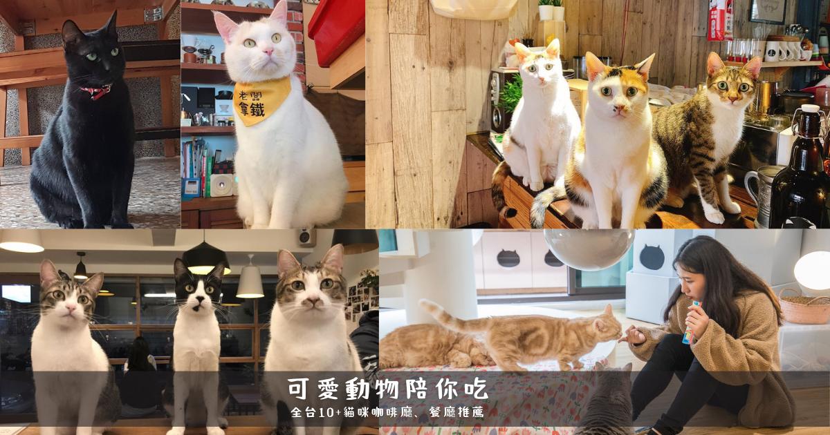 貓奴必訪,吸貓吸到ㄎㄧㄤ也甘願!全台10+間「貓貓咖啡廳、餐廳」推薦
